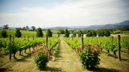 Hotels in Yarra Valley